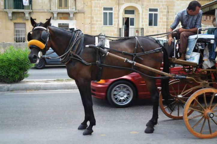 hästlivmalta1