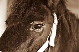 ponny4