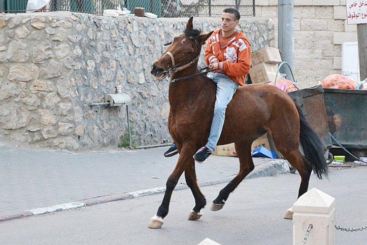 häst2