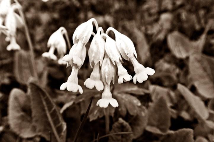 våren3