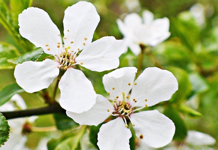 våren4